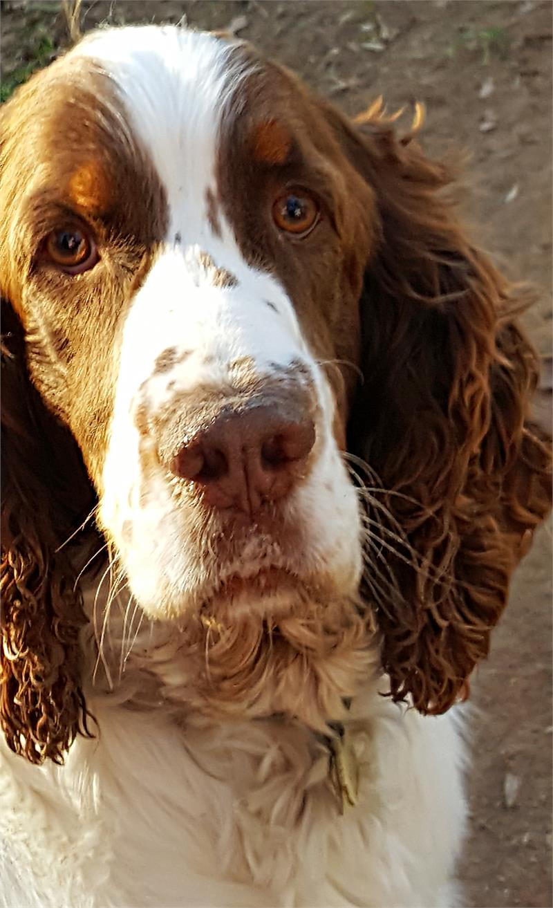Dogs with freckles